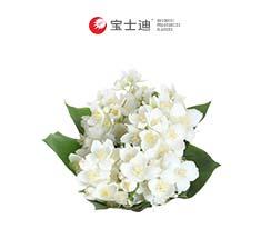 4178小花茉莉新万博manbetx体育app下载