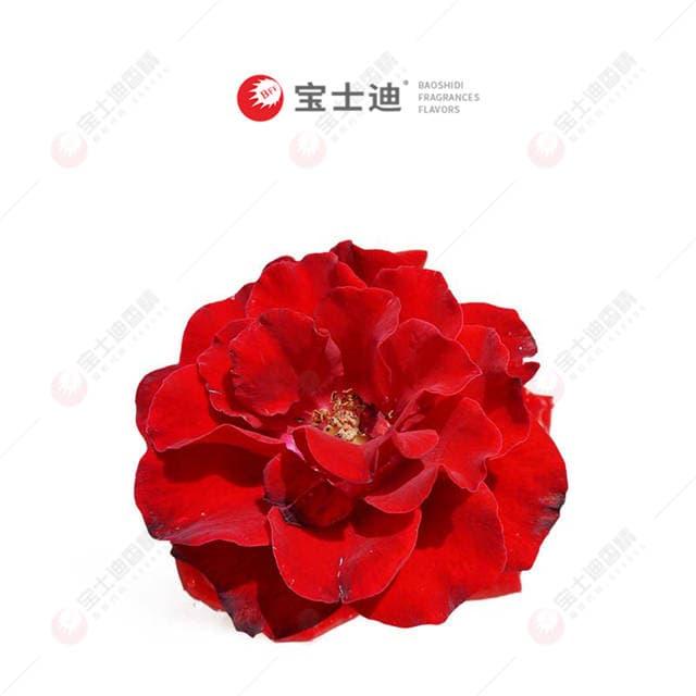 红玫瑰yabo88